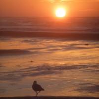 Meeuw bij zonsondergang