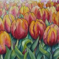 Veld  met roodoranje tulpen
